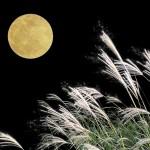 【お月見しよう】中秋の名月 今年は何日?
