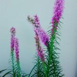 子どもとプランター葬をした鉢に花が咲きました【ペットと命】