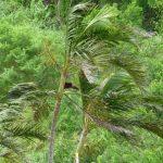 台風21号 台風・ゲリラ豪雨に備える